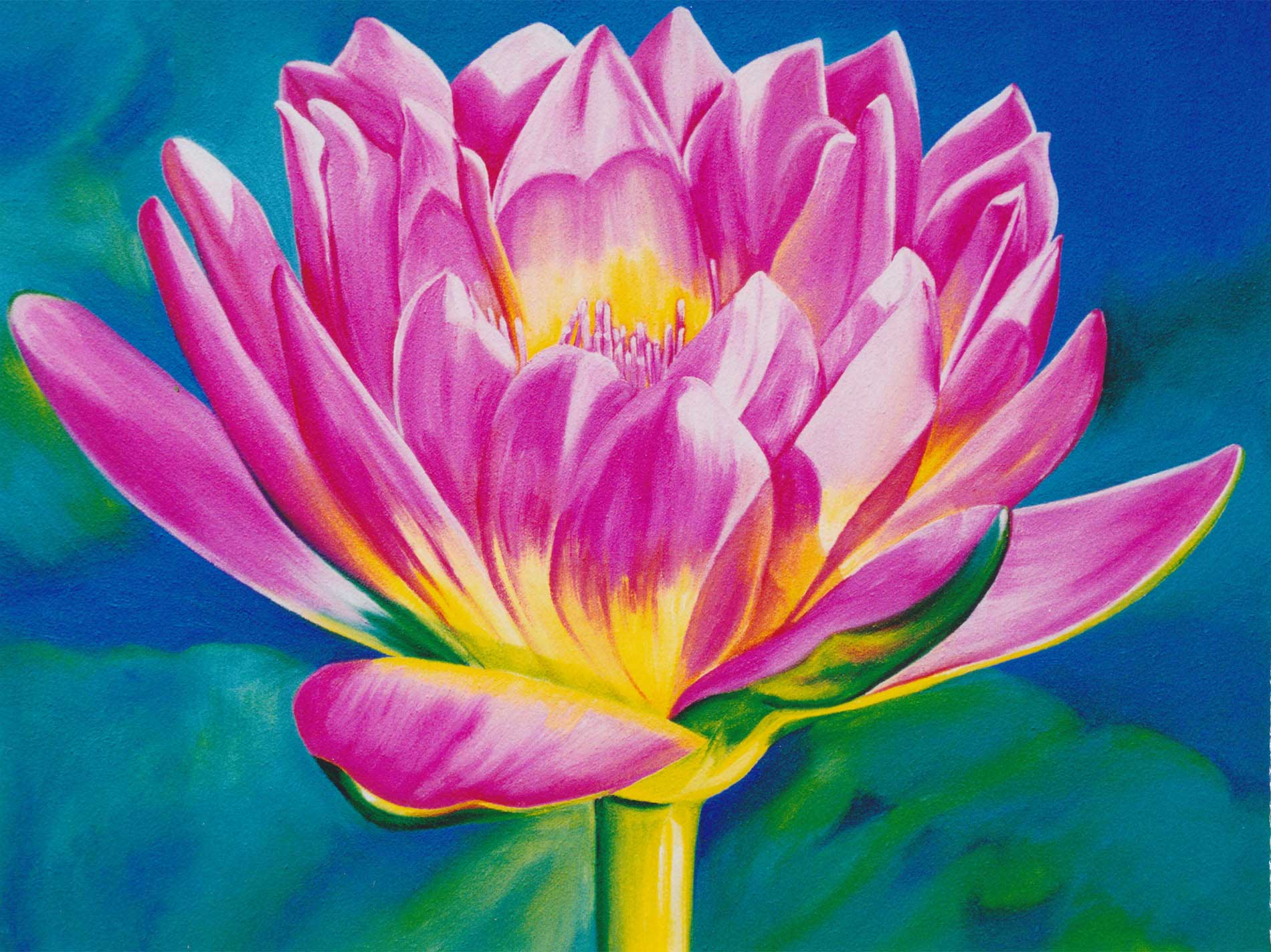 pink and yellow water lilly oil painting