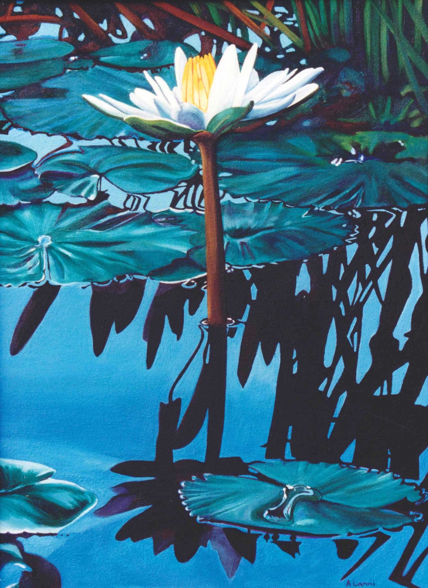 white water lilly oil painting