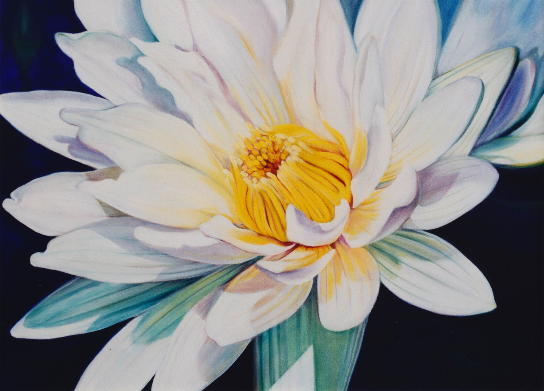 nymphaea alba lilly oil painting