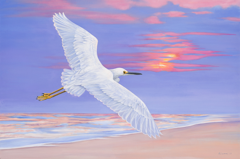 snowy egret in the evening twilight